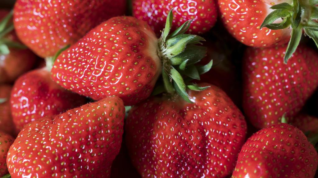 ARCHIV - 11.05.2019, Thüringen, Gebesee: Erdbeeren liegen bei der Eröffnung der Erdbeer-Saison in einem Korb. Erdbeerbauern  in Mecklenburg-Vorpommern haben in diesem Jahr voraussichtlich deutlich weniger Ernte eingefahren als im Vorjahr. Foto: Jens-