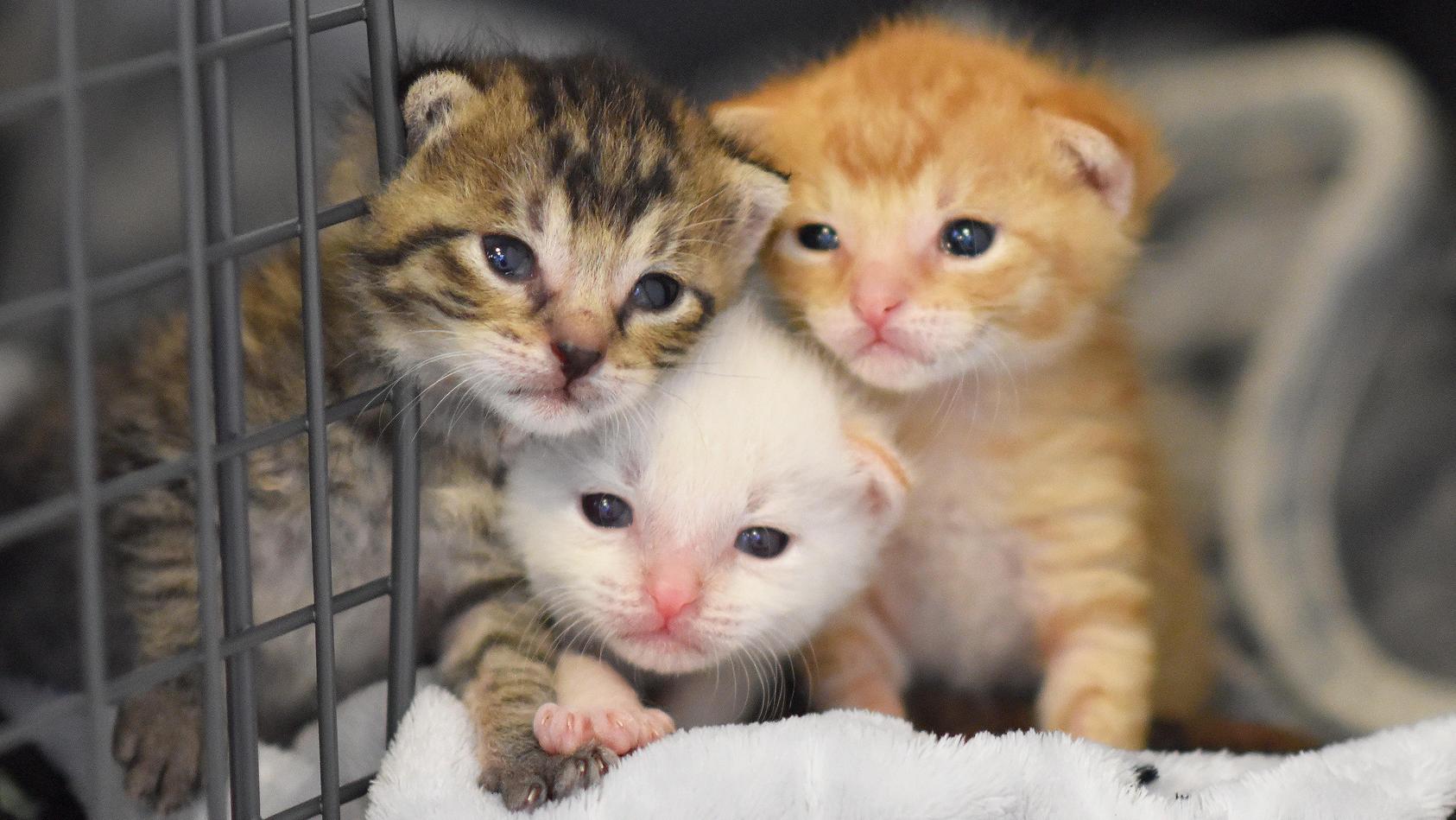 Die Zahl der Katzenbesitzer in Deutschland wird auf rund acht Millionen Personen geschätzt.