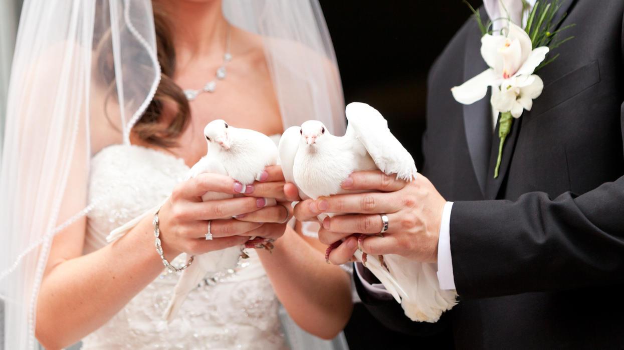 Ist der Brauch von Hochzeitstauben Tierquälerei?