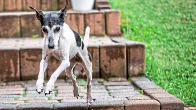 Terrier Betty