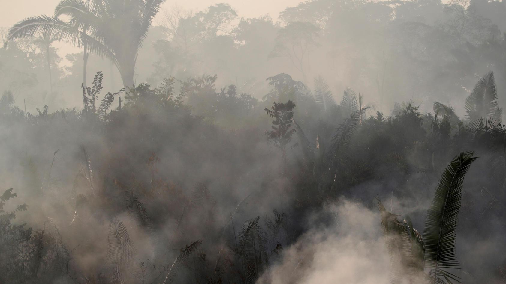 Die grüne Lunge unserer Erde brennt.