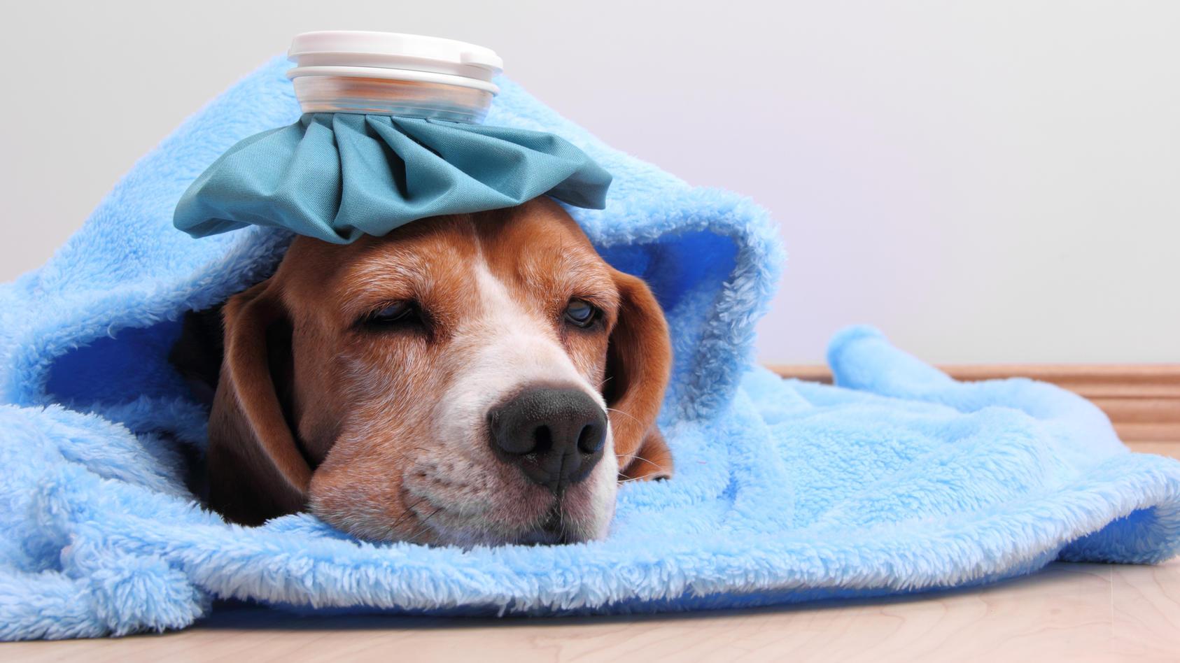 Mein Hund ist krank. Darf ich als Festangestellter auch von zu Hause arbeiten? Oder bekomme ich sogar einen Tag Sonderurlaub?