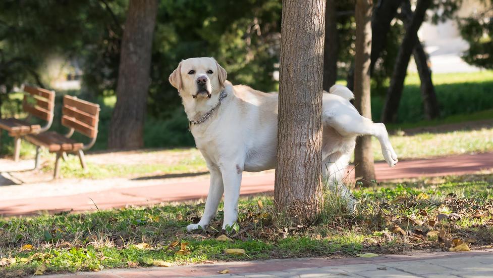 Den Hund einfach an den Baum pinkeln lassen? Das könnte in Sevilla bald teuer werden.