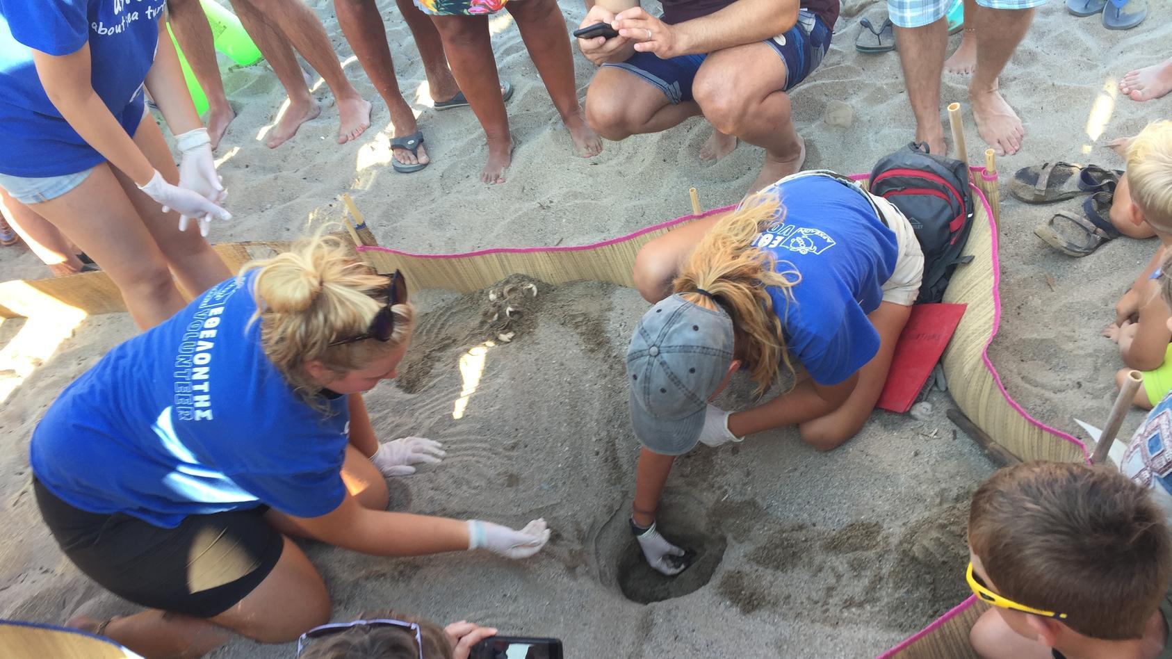 Freiwillige einer Hilfsorganisation helfen den Meeresschildkröten aus ihren Eiern und sorgen dafür, dass sie sicher ins Meer gelangen.