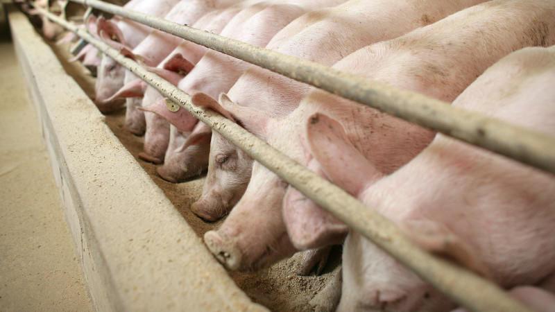 Wer nur wenig Geld für Fleisch zahlen will, muss sich darüber im Klaren sein, dass er damit keine guten Haltungsbedingungen unterstützt.