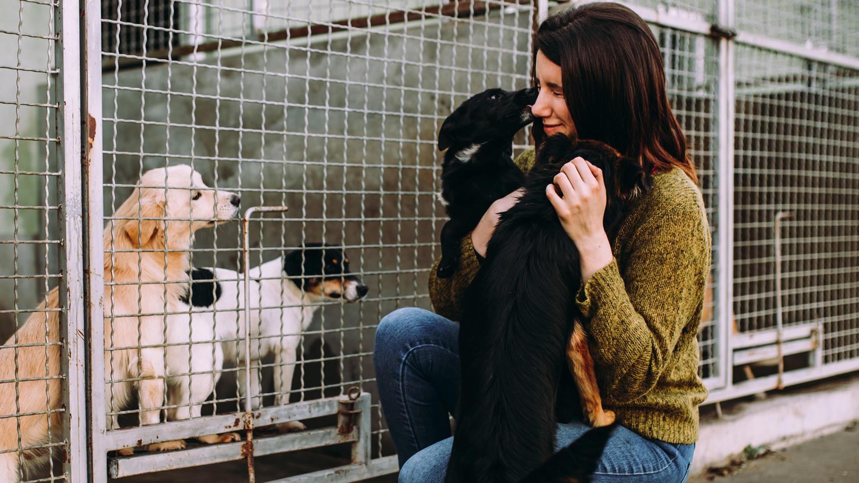 Einige Hunde verbringen mehrere Jahre im Tierheim. Für diese Hunde fordert die Berliner CDU eine dauerhafte Steuerbefreiung.