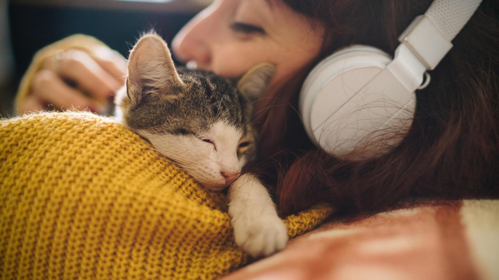 Katzen lieben ihre Bezugsperson ähnlich wie Kleinkinder ihre Eltern. Das will eine Studie nun herausgefunden haben.