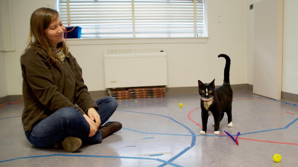 Eine Besitzerin mit ihrer Katze während des Secure Base Tests.