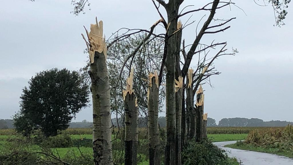 29.09.2019, Niedersachsen, Beesten: Abgeknickte Bäume stehen an einer Straße im Emsland. Ein starker Sturm hat in Beesten im Landkreis Emsland mehrere Bäume zerstört und einen Stall abgedeckt. Augenzeugen hätten von einem Tornado berichtet, sagte ein