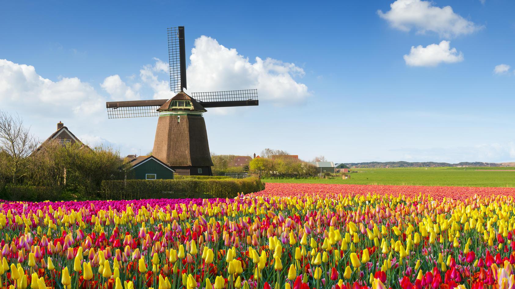 Frühling in den Niederlanden