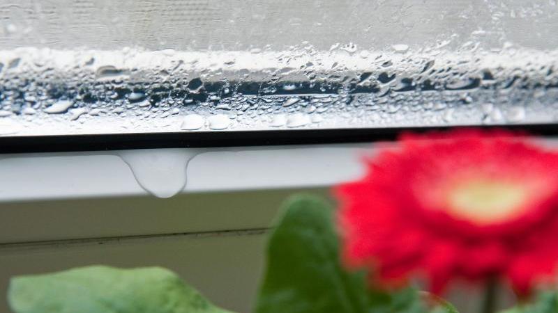 Feuchte Fenster können Schimmel verursachen.