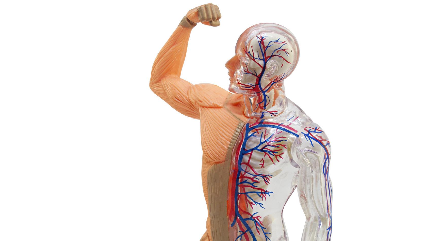 Die Homöostase bezeichnet ein System, das bestimmte Werte konstant, oder zumindest in zulässigen Grenzen hält.