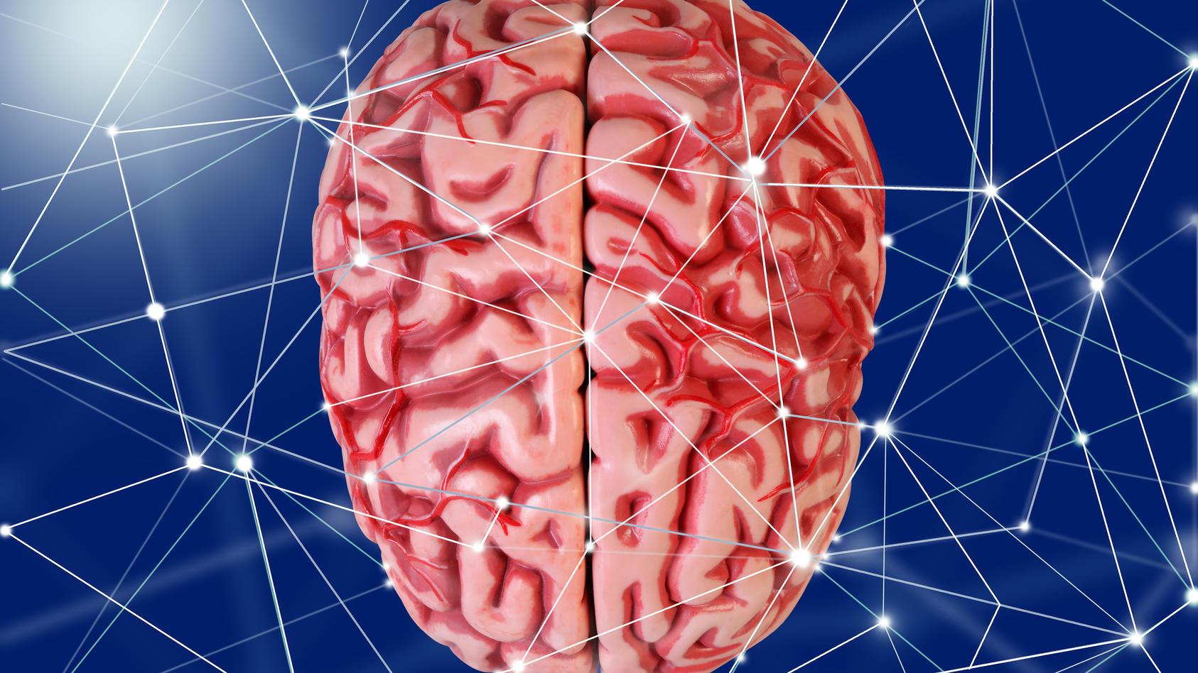 Modell eines menschlichen Gehirns