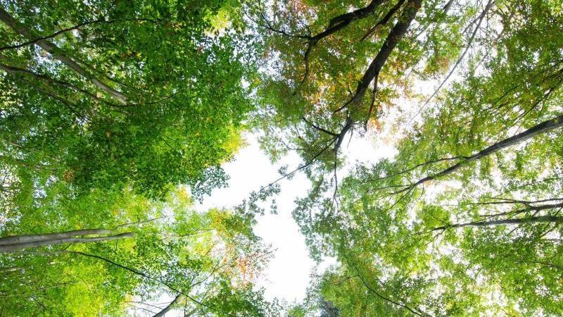 Bäume im Wald tragen zum Teil ihr buntes Herbstkleid. Foto: Friso Gentsch/dpa/Archivbild