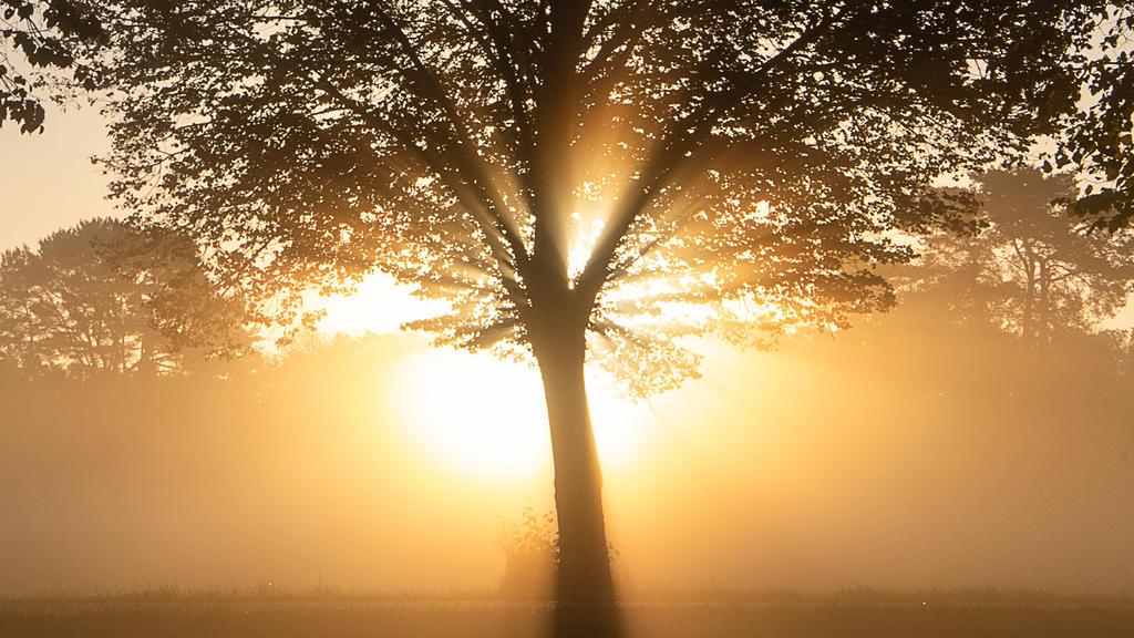 14.10.2019, Baden-Württemberg, Kirchentellinsfurt: Die Sonne geht hinter einem Baum in Nebel auf. Foto: Sebastian Gollnow/dpa +++ dpa-Bildfunk +++