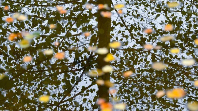 Bunt gefärbte Blätter schwimmen auf dem Wasser eines Sees, während sich Bäume in der Oberfläche spiegeln. Foto: Patrick Pleul/dpa-Zentralbild/dpa/Archivbild