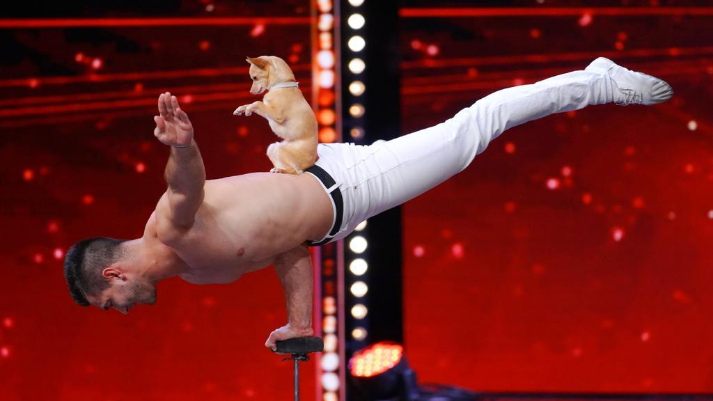 Der putzige Percy stiehlt Akrobat Christian Stoinev die Show.