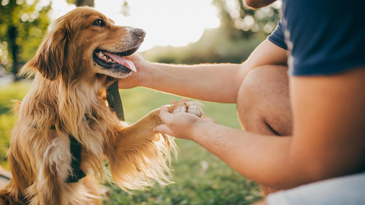 Hunde leben durchschnittlich zwischen 10 und 13 Jahre.