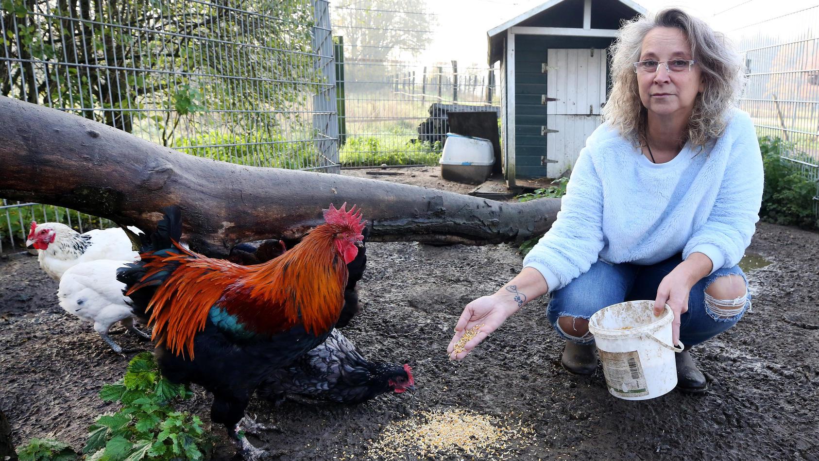 Vor dem Prozess um Schadenersatz für Film-Huhn Sieglinde