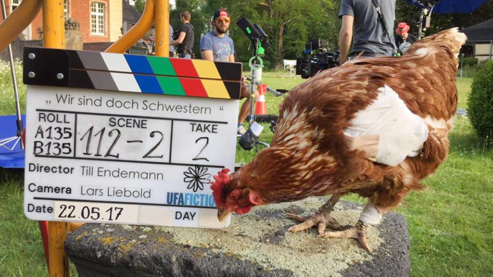 Das Huhn Sieglinde bei Dreharbeiten zu einem Film (Foto vom 22.05.2017). Sieglinde hätte wohl noch Karriere gemacht. Aber sie wurde von einem Hund tot gebissen.