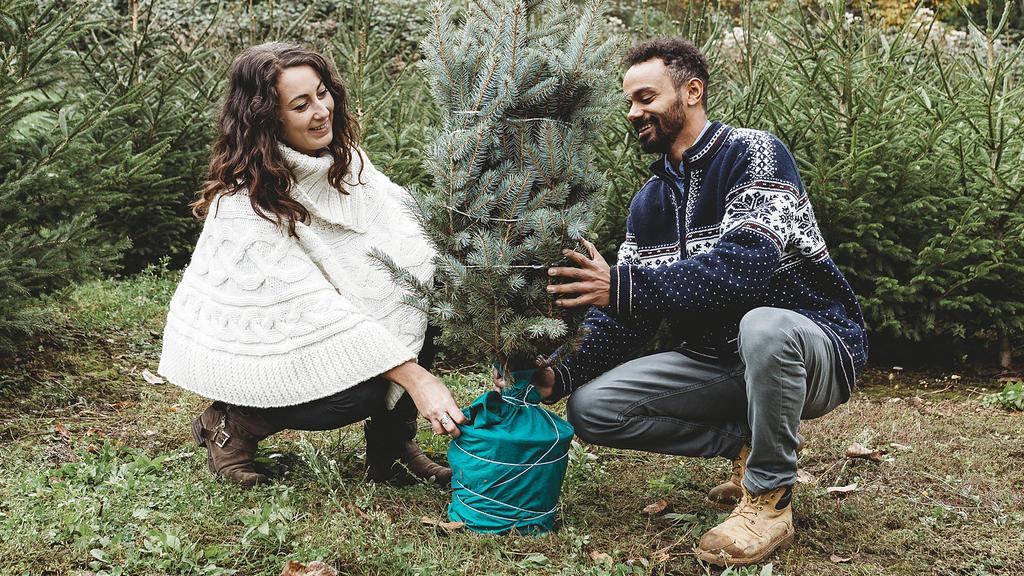 Ein Weihnachtsbaum mit Ballen