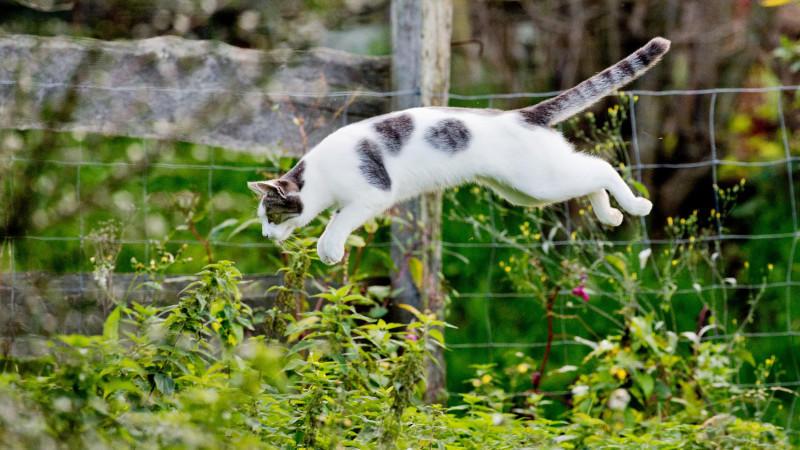 Hauskatzen mit Freigang folgen ihrem Instinkt und jagen andere Tiere.