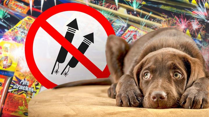 Böllerverbot oder gar kein Verkauf - immer mehr Menschen wollen Tiere und Umwelt schützen.