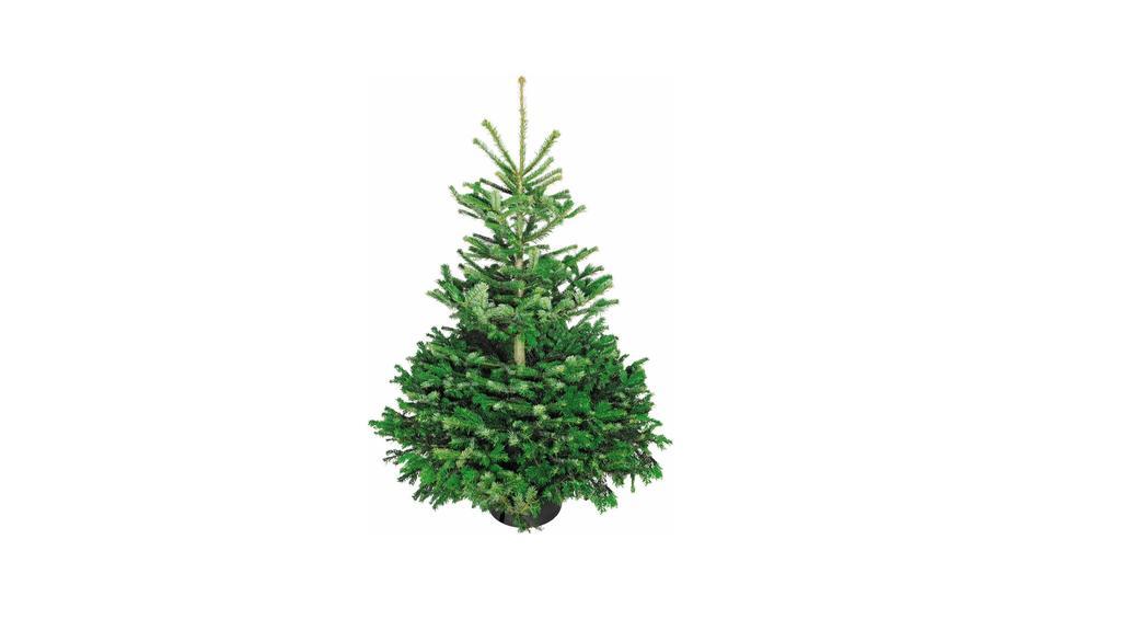 Obi: Weihnachtsbaum online bestellen