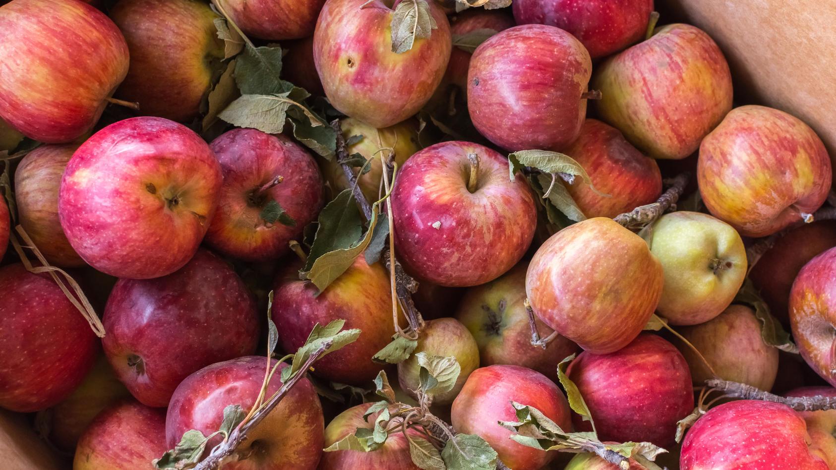 Auch Äpfel mit kleinen Makeln schmecken gut.