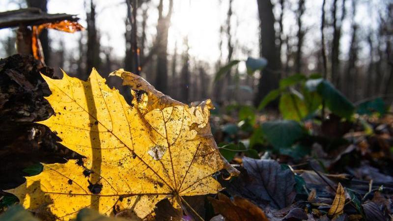 Ein herbstlich gefärbtes Blatt liegt auf dem Boden. Foto: Lucas Bäuml/dpa/Archiv