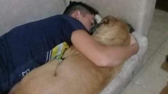 Sein Herrschen versucht den Hund durch Umarmung zu retten.