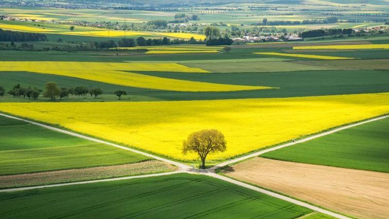 Ein Baum steht umgeben von Feldern, auf denen Getreide und Raps angebaut wird. Foto: Frank Rumpenhorst/dpa/Archiv