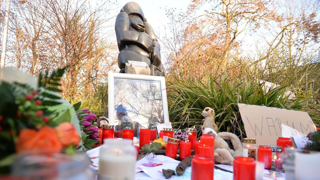 Inferno im Krefelder Zoo am 01.01.2020 in Krefeld Inferno im Krefelder Zoo. Das Affenhaus ist in der Silvesternacht vollständig niedergebrannt. Alle Tiere sind tot. Eine Katastrophe für den Tierpark. Das Affenhaus aber brannte bis auf die Grundmauer