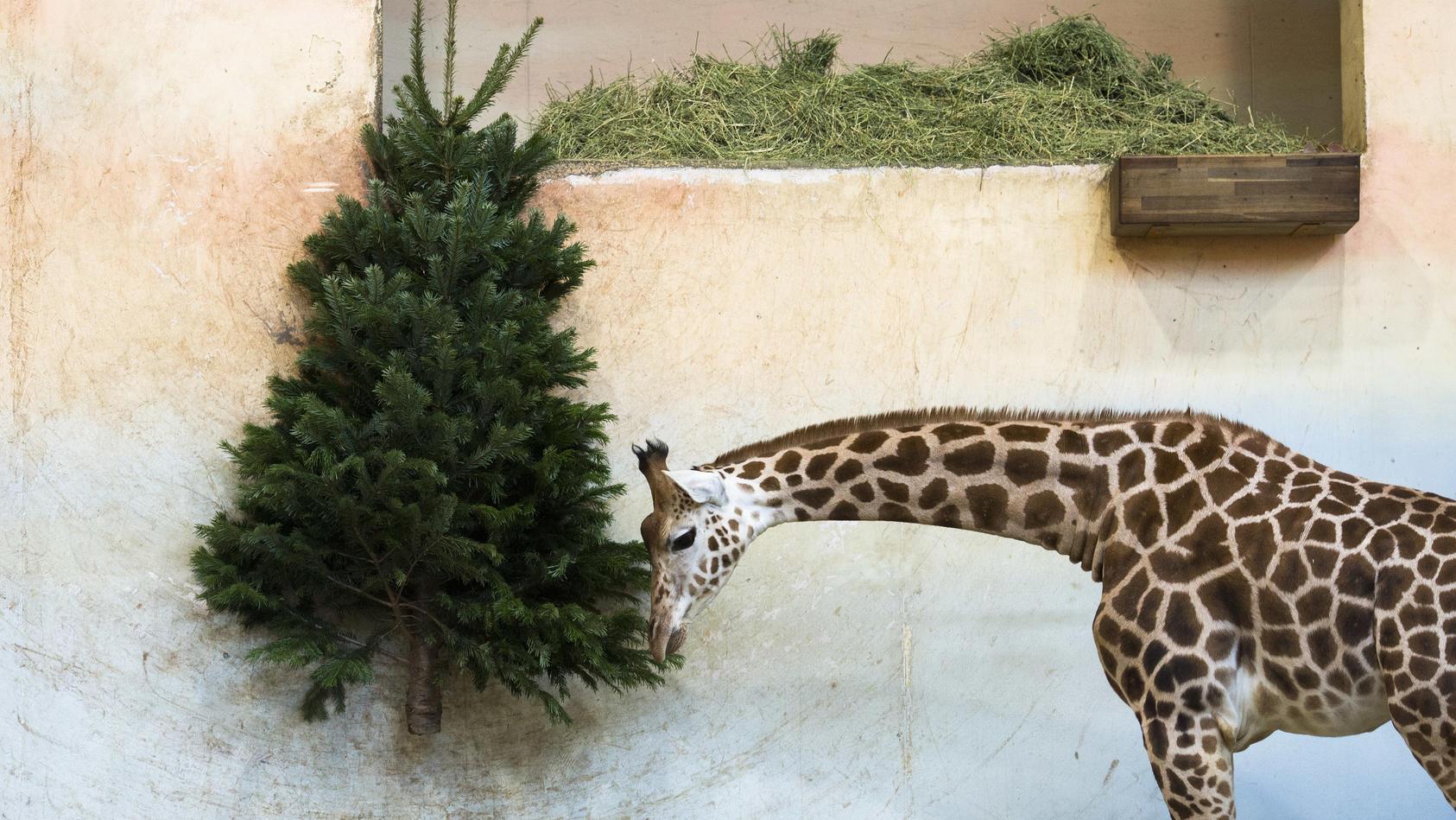 Weihnachtsbaum einfach entsorgen? Wir haben bessere Ideen!