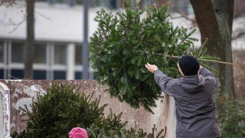 Entsorgung alter Weihnachtsbäume. Foto: Robert Michael/zb/dpa/Archivbild