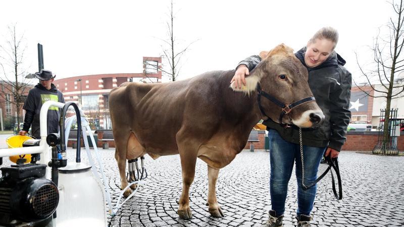 Die Milchkuh Lisa und Jungbäuerin Franziska. Foto: Roland Weihrauch/dpa