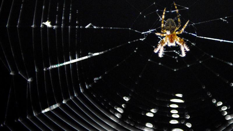 Eine Kreuzspinne (lat. Araneus) hat am 08.06.2014 in Bamberg (Bayern) ihr Netz im Scheinwerferkegel einer Brücke gebaut, um vom Licht angezogene Insekten in die Falle zu locken. Foto: David Ebener/dpa +++(c) dpa - Bildfunk+++