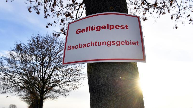 """Ein Schild mit der Aufschrift """"Geflügelpest Beobachtungsgebiet"""" steht an einer Zufahrtsstraße. Foto: Jens Kalaene/dpa-Zentralbild/dpa/Archivbild"""