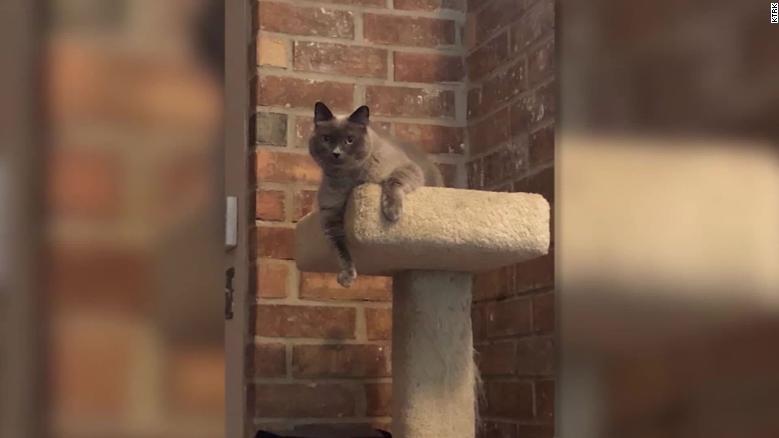 Katze Sophie sollte eigentlich nur geimpft werden, doch die Tierärztin gab ihr das falsche Medikament.