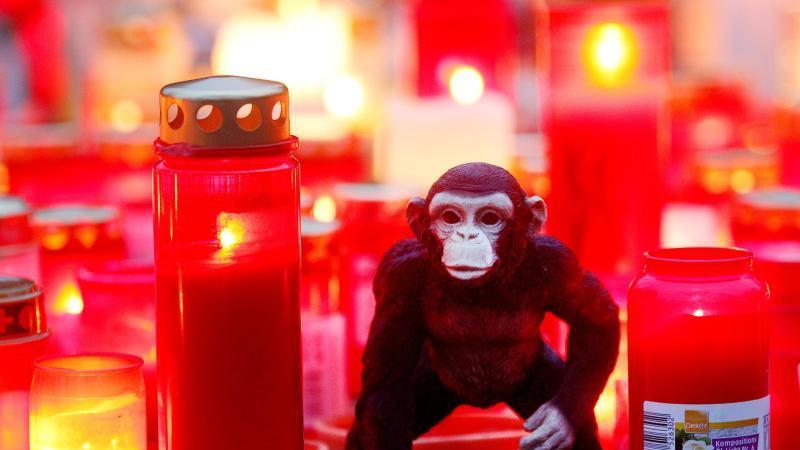 Kerzen und ein Stofftieräffchen zum Gedenken an die im Krefelder Zoo umgekommenen Affen. Foto: Roland Weihrauch/dpa/Archivbild