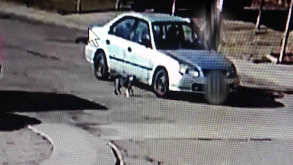 Eine Überwachungskamera filmte, wie Welpe Junior entführt wurde.