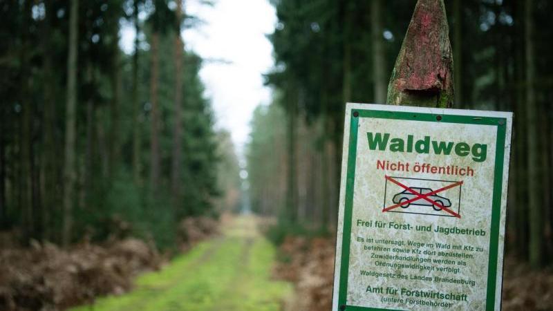 Die Landesforsten warnen wegen Orkanstürmen vor dem Betreten von Wäldern. Foto: Soeren Stache/dpa/Archivbild