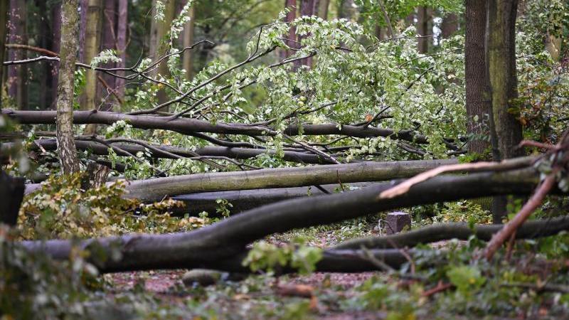 Umgekippte Bäume liegen in einem Walgebiet nach einem Sturm. Foto: Ralf Hirschberger/dpa-Zentralbild/dpa/Archiv