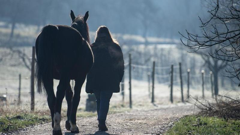 Eine Frau geht mit einem Pferd am Morgen spazieren. Foto: Sebastian Gollnow/dpa/Archivbild