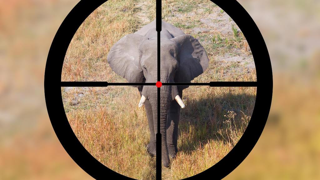 Botswana hat den Jagd-Bann gegen Elefanten aufgehoben. Naturschützer schlagen Alarm, Tierfreunde rufen Touristen zu Boykott auf.