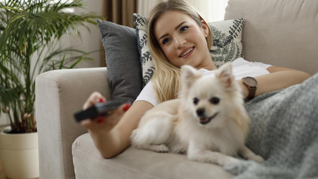 Die Farbwahrnehmung von Hunden ist blasser und ihr Gehör schafft viel mehr Frequenzbereiche, als das unsere.