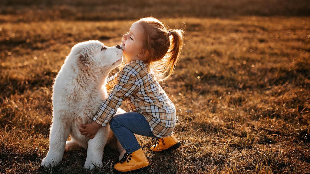Körperkontakt ist für Hunde vielmehr als nur Berührung und stellt einen weiteren Kommunikationskanal dar.