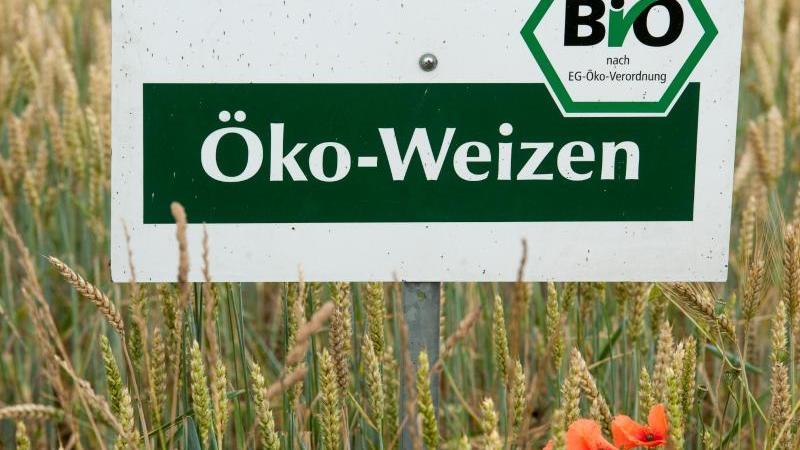"""Ein Schild mit der Aufschrift """"Öko-Weizen"""" steht in einem Feld mit Bio-Getreide. Foto: Armin Weigel/dpa/Archivbild"""
