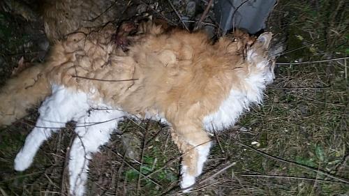 Katzenmassaker 2.jpg