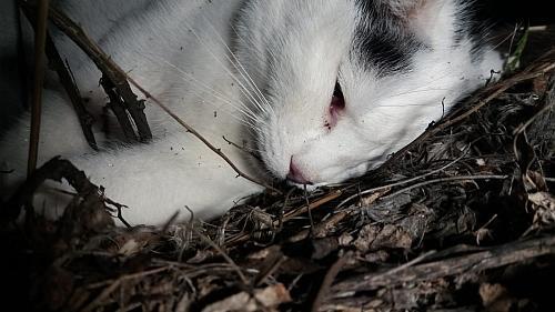 Tote Katze in Igling
